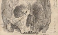 A sketch of a skull found among the Richard II relics at the National Portrait Gallery Photograph courtesy National Portrait Gallery London