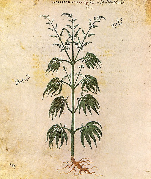 Medicinal Properties of Cannabis According to Medieval Manuscripts of Azerbaijan