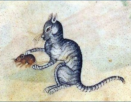 The role of the feline in the medieval society of the North Atlantic region