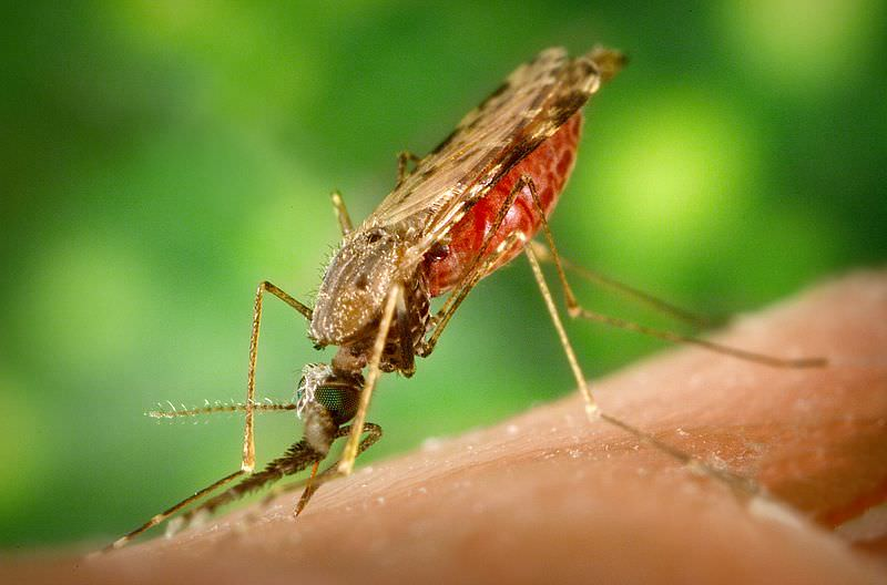 Malaria and malaria-like disease in the early Middle Ages