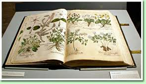 Flowers for the Book-binder's Wife: An Investigation of Florilegia and Early Modern Women's Writing