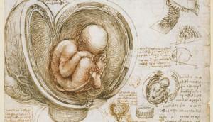 Leonardo da Vinci: Anatomist exhibition - photo courtesy the Royal Collections