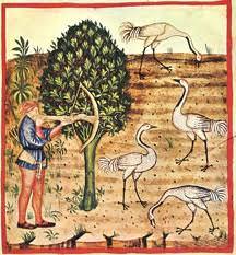 Medieval birds