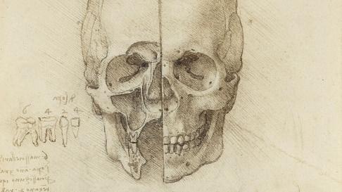 Exhibition reveals the genius of Leonardo's anatomical work