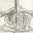 The assertion that Mondino da Luzzi, the 14th Century Bolognese anatomist, was the first genuine human anatomist is questioned.