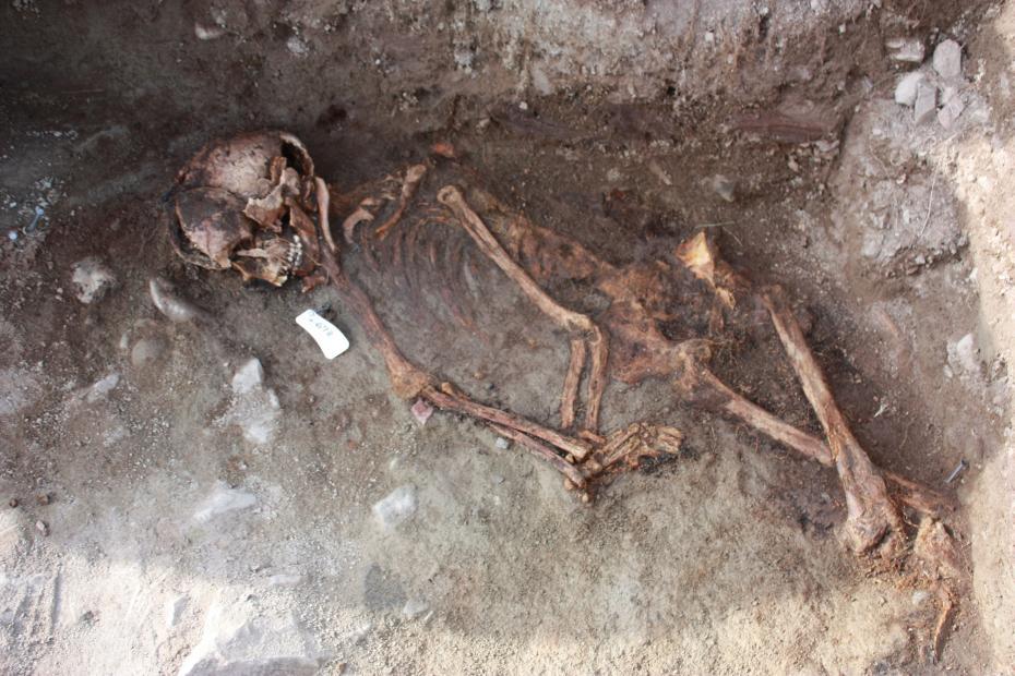 Skeleton Greenland