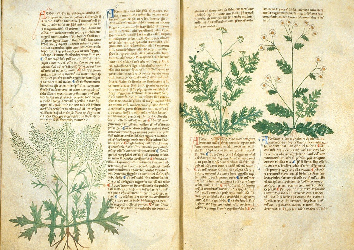medieval medical plants from the Antidotarium Nicolai