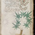 A Professor in Applied Linguistics believes he has decoded a few words from the mysterious Voynich Manuscript, a 600-year old work that has baffled scholars for the last hundred years.