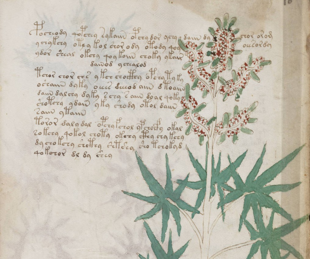 Voynich Manuscript partially decoded, text is not a hoax, scholar finds