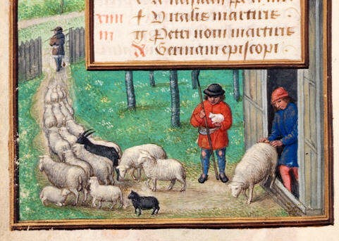 http://www.medievalists.net/wp-content/uploads/2014/02/medieval-sheep-e1393427965863.jpg