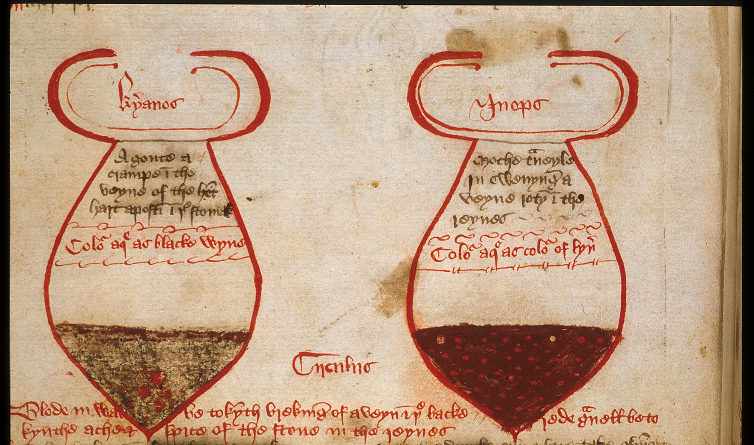 Detail of the lower part of the folio showing urine glasses with different bands of colour and floating particles at various levels, with the colours marked in Greek: 'kyanos' (blue), on the left, and 'inopos' (wine-coloured) on the right.