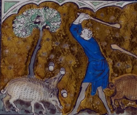 Pigs and Pollards: Medieval Insights for UK Wood Pasture Restoration