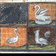 """Birds,"" writes Albertus Magnus, ""generally call more than other animals. This is due to the lightness of their spirits."""
