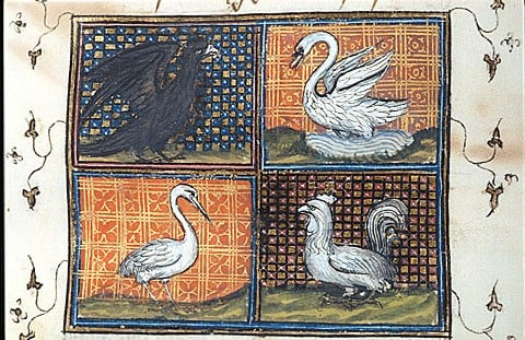 'That melodious linguist': Birds in Medieval Christian and Islamic Cosmography