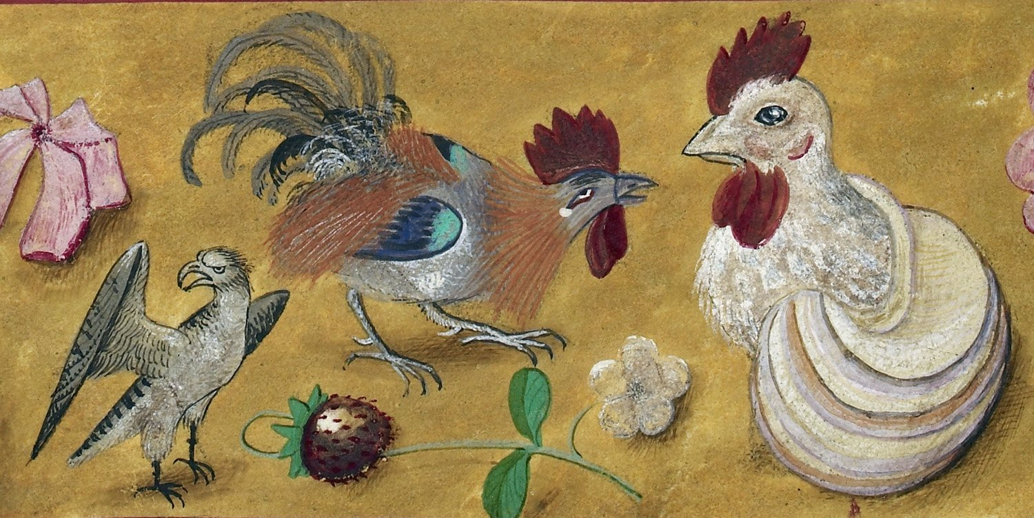 How Chickens looked different in the Middle Ages