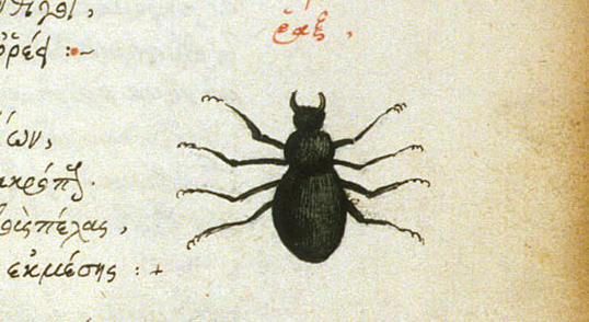 Medieval insect - from British Library MS Burney 97   f. 29