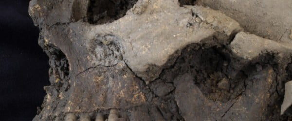 The remains of at least five people have been discovered by archaeologists working at Trinity College in Dublin, Ireland. Since they were found at a depth of 1.5 metres below the surface, it suggests the remains are most likely medieval or earlier in date.