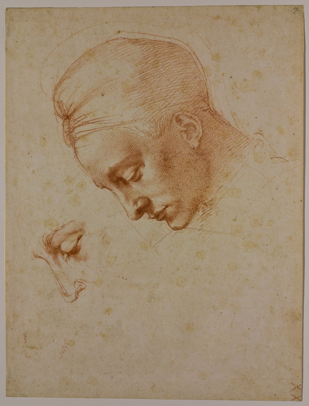 Studies for the head of Leda c.1530 - Casa Buonarroti / AGO