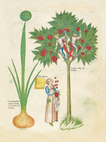 'I know not what it is': Illustrating Plants in Medieval Manuscripts