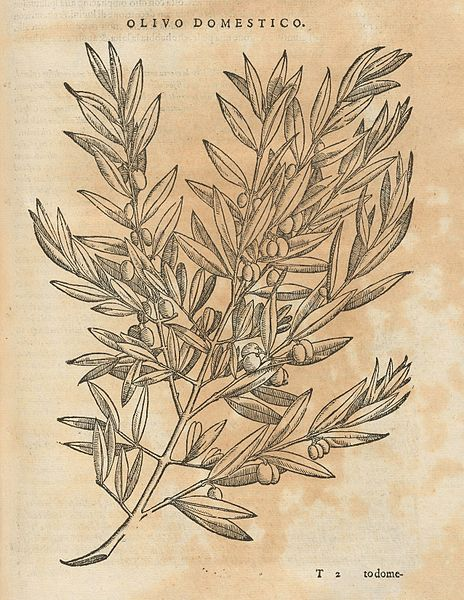 Profile of a Plant: The Olive in Early Medieval Italy, 400-900 CE