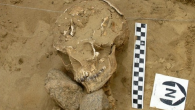 The aim of this paper is to look behind this popular image to consider the archaeological evidence for vampire burials.