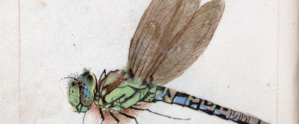 From Dragons to Dragonflies - over 50 images from medieval manuscripts found on Twitter this week!