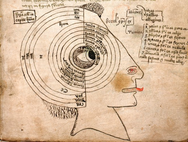 Detail of a diagram of the seven tunics and three humours of the eye and the skull, labelled for the conjunctiva, cornea, uvea, albugineus (aqueous) humor, tunica aranea (interior capsule of the lens), cystalline humor or lens itself.