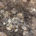 5,251 silver coins dating back to the 11th century were discovered last month on a farm in Buckinghamshire, England. It is thought to be one of the largest hoards of Anglo Saxon coins ever found in Britain.