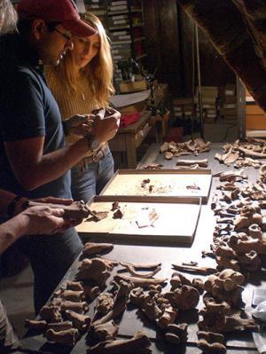 Animal bones - basement of Riga Castle, Latvia. Aleks Pluskowski