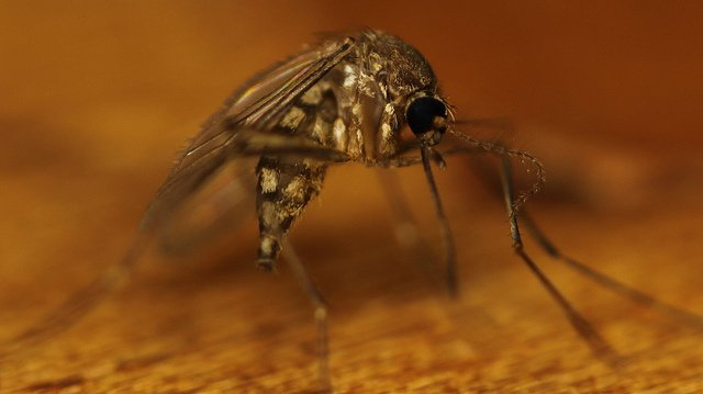 Historian discovers evidence of malaria from the Early Middle Ages