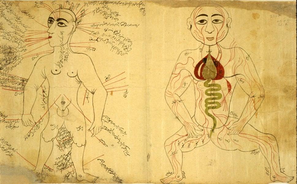 medieval anatomy figures