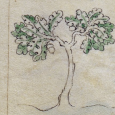 What did medieval people think of trees? Here are a few observations about the role trees played in the spiritual and cultural life of the Middle Ages.