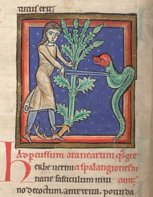 British Library picture (showing an image of a herbarium with vervain): Catalogue of Illuminated Manuscripts, www.bl.uk/catalogues/illuminatedmanuscripts/