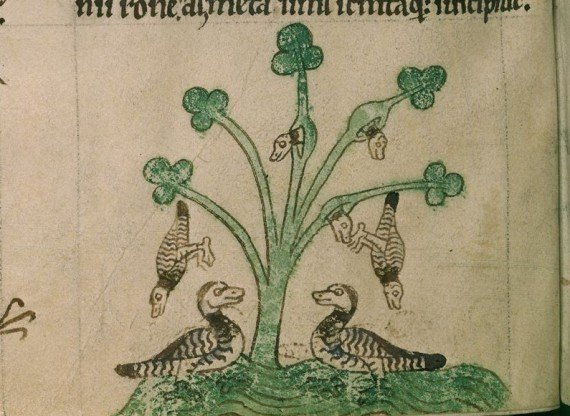 Barnacle Goose depicted in Gerald of Wales Topographia Hiberniae - British Library Royal 13 B.VIII, f.8v