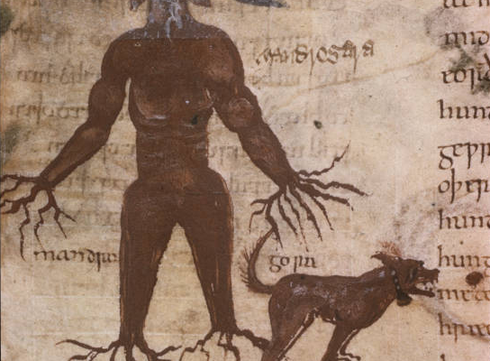 The Mandrake Plant and Six Anglo-Saxon Cures