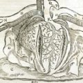 The Middle Ages Contributions to Cardiovascular Medicine