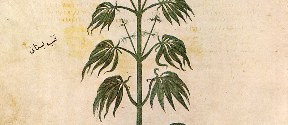 Getting High in the Middle Ages: Hashish in Medieval Egypt