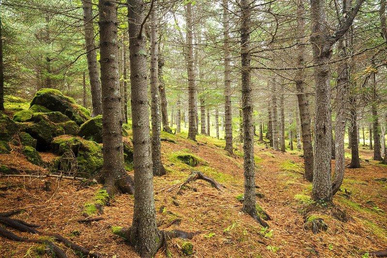 Wood And Woodlands In Icelandic Literary, Documentary And Archaeological Sources - Medievalists.net